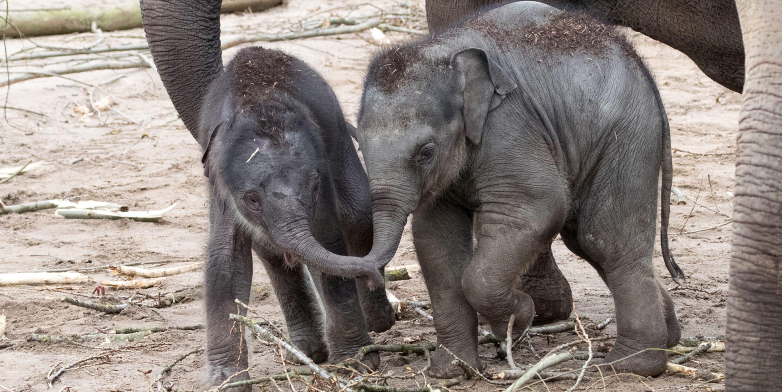 Startslider Kleine Elefanten bestaunen 2018 (24)