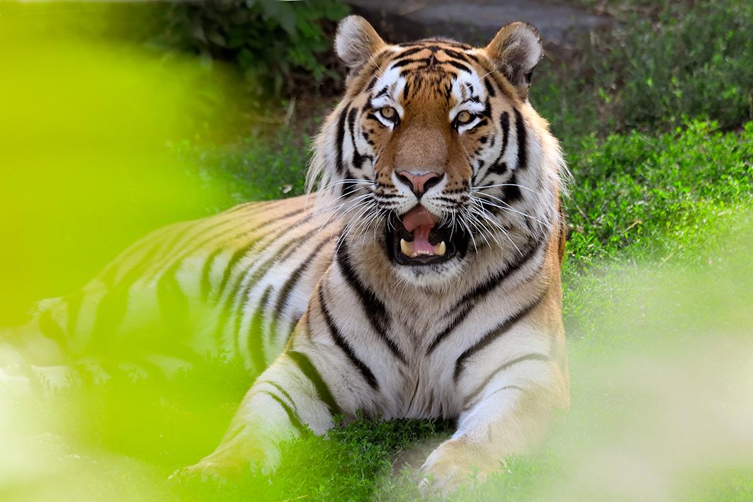 Startslider Neue Tigeranlage
