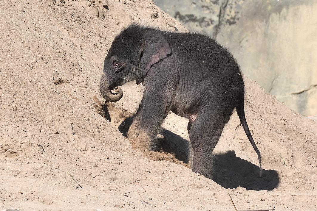 Startslider Elefant geboren