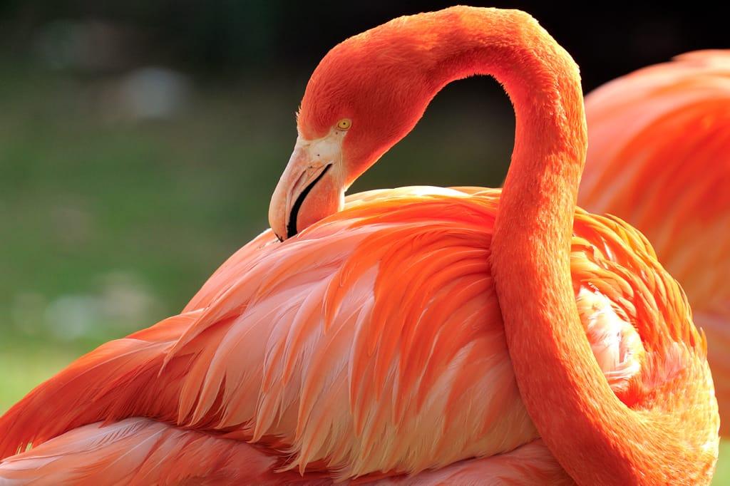 Startslider Kölner Zoo wieder geöffnet